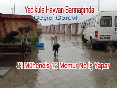 Fatih Belediyesinin Sürgün Yeri Yedikule Hayvan Barınağı