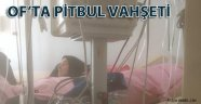 Pitbull vahşeti Can alıyordu