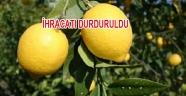 Limon İhracatı Durduruldu