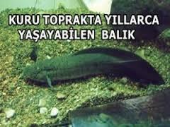 Kuru toprakta yaşayan balıklar